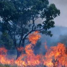 Major funding boost to explore the health impacts of recent bushfires