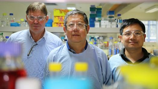 Professors Rick Thorne, Xu Dong Zhang and Dr Lei Jin